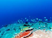 鱼和生态系海底  免版税库存照片