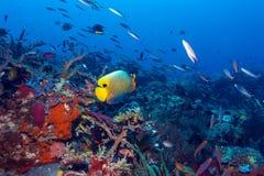 鱼和生态系海底  库存图片