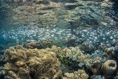 鱼和礁石在热带太平洋Shallows  库存图片