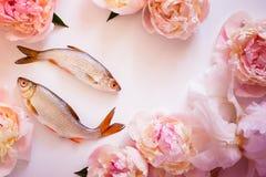 鱼和花概念 免版税库存照片