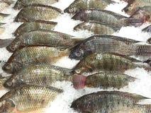 鱼在冰篮子的待售 免版税库存照片