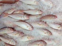 冻鱼在市场上 库存图片