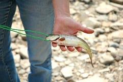 鱼在手中 免版税库存图片