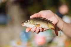 鱼在手渔体育爱好捉住了 库存照片