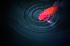 鱼在池塘自然背景中 免版税库存图片
