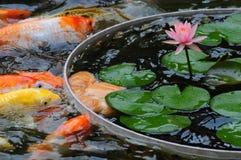 鱼在池塘 免版税库存图片