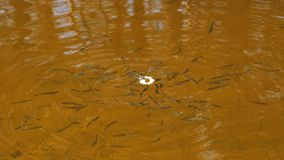 鱼在河吃面包 股票录像