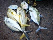 鱼在海鲜市场上 库存图片