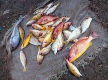 鱼在海鲜市场上 库存照片