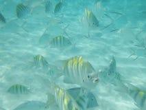 鱼在海洋 库存图片