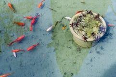 鱼在表面下 库存照片