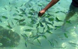 鱼在Krabi海滩和海岛泰国 库存图片