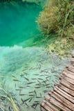 鱼在Plitvice湖中,克罗地亚清楚的水  库存照片