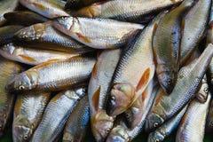 鱼堆 免版税库存图片
