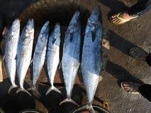 鱼大小比较 库存图片