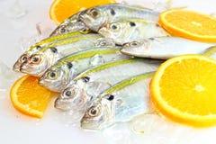 鱼大量黄尾鱼 库存照片