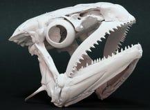 鱼头骨 库存图片