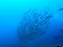 鱼学校  免版税库存图片