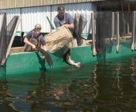 鱼孵卵站 库存照片