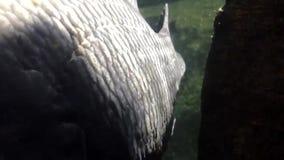 鱼宏观射击在水中 股票视频