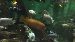 鱼宏观射击在水中 影视素材