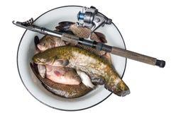 鱼居住河 库存照片