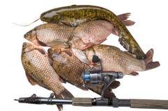 鱼居住河 库存图片