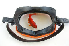 鱼屏蔽 库存图片