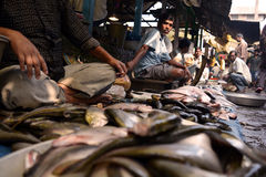 鱼市在农村印度 库存照片