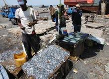 鱼市在桑给巴尔石头城 免版税图库摄影