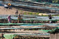 鱼市在马拉维 免版税库存照片