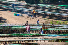 鱼市在马拉维 免版税图库摄影