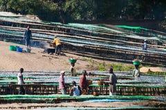 鱼市在马拉维 库存图片
