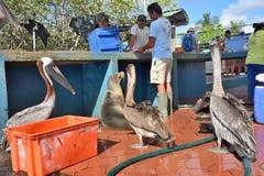 鱼市在Puerto阿约鲁,加拉帕戈斯 免版税库存照片