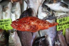 鱼市镀金面领袖鲂鱼 库存照片