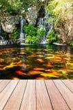 鱼庭院koi池塘瀑布 图库摄影