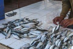 鱼待售在摩洛哥 免版税库存图片
