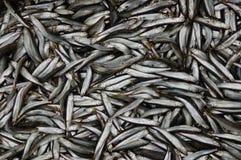 鱼批次 免版税库存图片