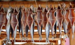 鱼抽烟了 免版税库存图片