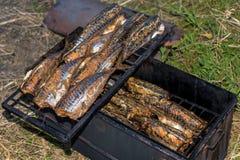 鱼抽烟的鲭鱼热户外 图库摄影