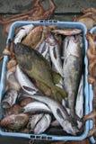鱼捕获 库存照片