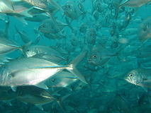 鱼插孔 免版税图库摄影