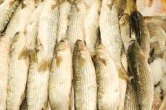 鱼新销售额 免版税库存照片
