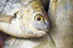 鱼新鲜市场火鸡 免版税图库摄影