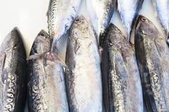 鱼新鲜市场金枪鱼 关闭 免版税库存图片