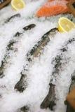 鱼新鲜的冰 库存照片