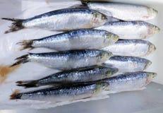 鱼新鲜的冰 免版税库存图片