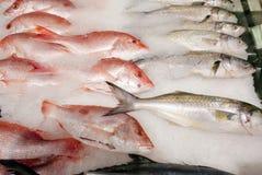 鱼新鲜的冰 免版税库存照片