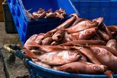 鱼新鲜的堆 免版税库存图片