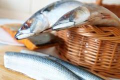 鱼新鲜的海运 免版税库存照片